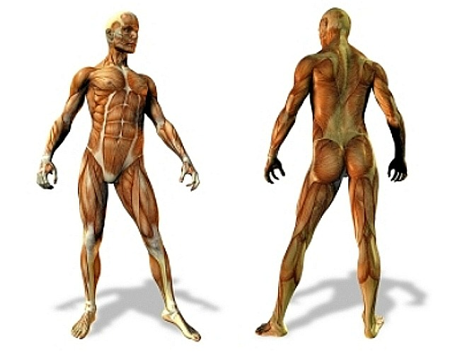 Exercises by Body Part